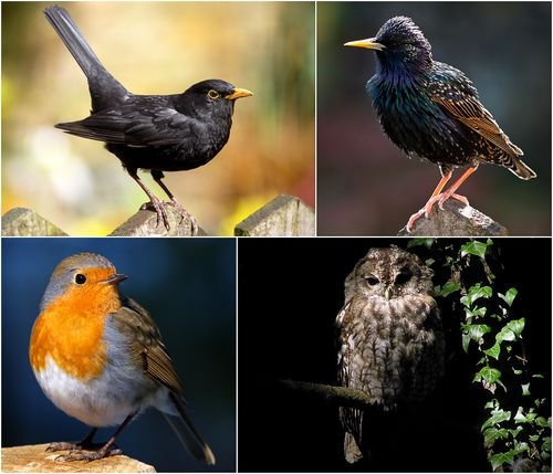 Photographs of Birds by Roger Butterfield