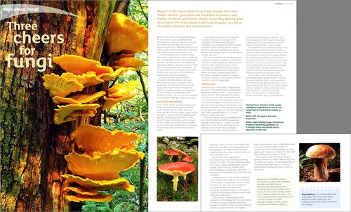 Article by Professor Roy Watling, illustrated by Roger Butterfield