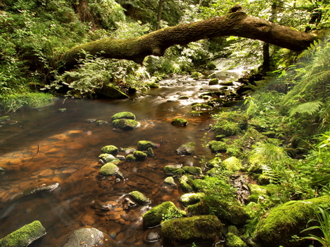 Rivelin Valley © Roger Butterfield