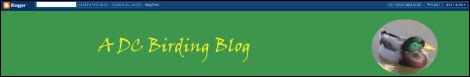 A DC Birding Blog