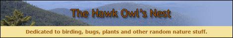 The Hawk Owl's Nest