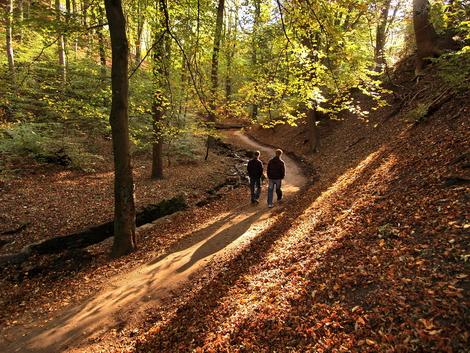 Cobnar Wood, Graves Park © Roger Butterfield