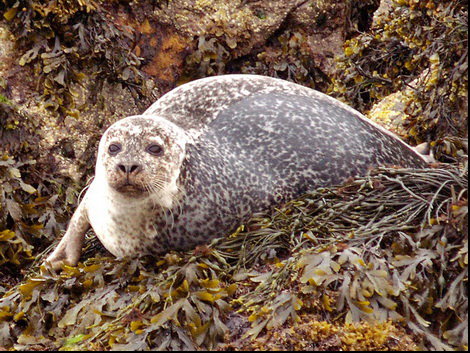 One of the residents of the Summer Isles © Roger Butterfield