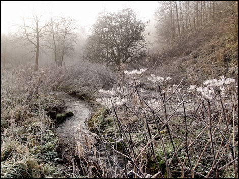 Tideswell Dale © Roger Butterfield